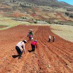 Capacitan a agricultores huancavelicanos en el manejo de la quinua