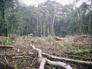 Gobierno establece cuatro ejes prioritarios para combatir la deforestación