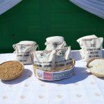 INIA presentó nueva variedad de arroz resistente a plagas