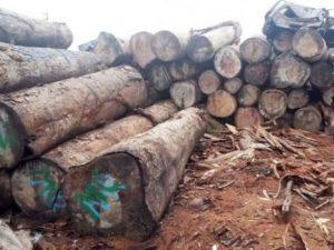 Minam respalda independencia del Osinfor para afrontar con eficacia lucha contra la tala ilegal