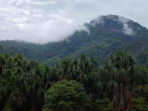 San Martín: Crean Área de Conservación Regional Bosques de Shunté y Misholo