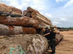 Adscripción del Osinfor al Minam mejorará eficacia del Estado contra la tala ilegal