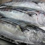 ¿Qué pescados son ideales para consumir en verano?