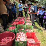 Huánuco: Agricultores podrán optimizar producción de semillas de papa de calidad genética