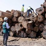 Intensificarán lucha contra la tala ilegal