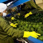 Países asiáticos ingresaron al top 5 de los principales destinos de exportación de Perú