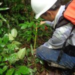 Comunidad nativa ucayalina participa en recuperación de boques degradados