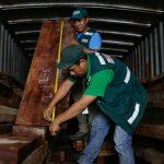 Intervienen transporte irregular de madera en Ucayali