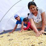 Junín: Más de 750 familias de Pangoa mejoran su producción de café