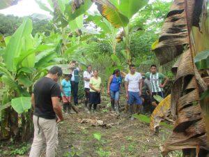 Loreto: Productores reconocidos como expertos en control de plagas del plátano