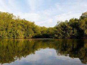Mincetur implementará infraestructura turística en Santuario Nacional Manglares de Tumbes