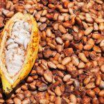 Goresam impulsa mitigación de la presencia de cadmio en el cacao