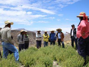 Arequipa: Capacitan a agricultores de Lluta para combatir plagas contra el orégano