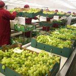 Exportaciones agrarias sumarían US$ 1,327 millones en primer bimestre de 2019