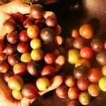 Exportaciones de Loreto se dinamizarán con actualización del Plan Regional Exportador
