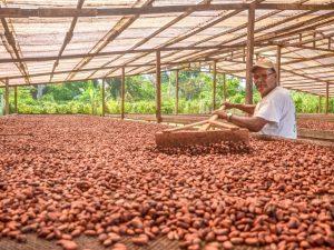 Cacao de Huánuco entre los siete mejores del país según el Programa Cacao de Excelencia