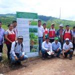 Promueven nuevas tecnologías de mejora del maíz amarillo duro en Picota