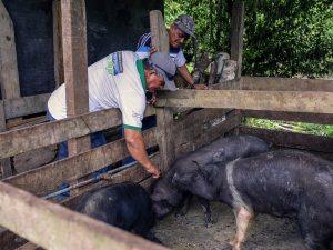 Realizan campaña de desparasitación de animales domésticos y de crianza en San Martín