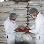 Se exportarán 42 toneladas de quinua ayacuchana al mercado europeo