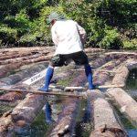 Ucayali: Recuperan 12 mil pies de madera en operativo contra tala ilegal