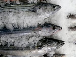 Venderán pescados a precios económicos en Junín