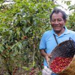 Invirtierten S/ 75.7 millones en potenciar a 12 mil productores cafetaleros