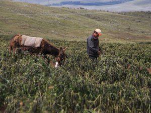 Junín: Capacitarán a campesinos sobre heladas y friaje