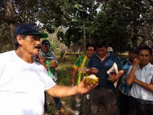 Productores serán capacitados para optimizar productividad del cacao