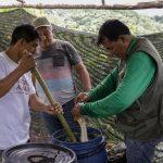 Promueven uso de biofertilizantes en parcelas de cacao en San Martín