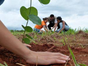 Reforestan faja marginal del río Huallaga-Sector Shansho en Bellavista