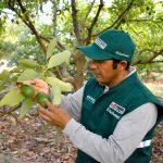 Ayacucho exportó más de 5 mil toneladas de Palta Hass a China
