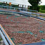 Goresam entrega módulo de post cosecha a productores de la comunidad Shepte