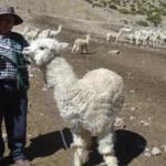 Minagri capacita a alpaqueros en Apurímac