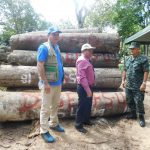 Transfieren madera para su buen aprovechamiento en Ucayali