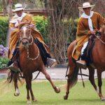 Alistan concurso de caballos de paso en Junín