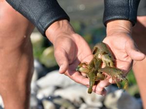 Iniciativas arequipeñas sobre extracción del camarón seleccionados por PNIPA