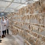 Otorgan autorización sanitaria a primera planta procesadora de charqui en Ayacucho