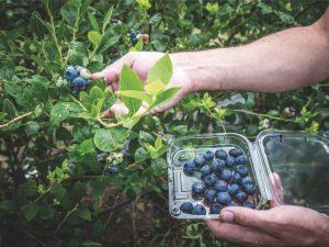 Región norte puede convertirse en la potencia agroexportadora del país