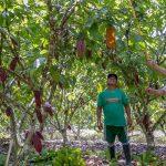 San Martín: Capacitan en manejo de poda a más de 100 beneficiarios