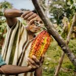 San Martín: Promueven labores productivas y conservación a favor de comunidades nativas
