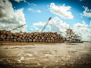 Coordinan promoción de la cadena de valor de la madera