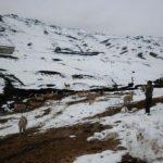 Evalúan daños por bajas temperaturas en Cajamarca y Huancavelica