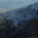 Extinguen incendio forestal que se presentó en el Cusco