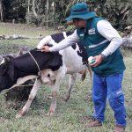 Loreto: Realizan acciones preventivas contra rabia en herbívoros