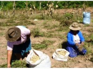 Mujeres podrán ocupar puestos directivos en Comunidades Campesinas