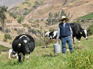 Ganaderos lecheros instan al Estado a exigir para el Perú lo mismo que la FDA demanda para EE.UU.