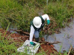 ANA identificó vertimientos de aguas residuales en el río Nanay
