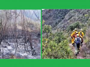 Amazonas: Incendio forestal en Tingo está controlado y en proceso de extinción