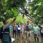 Capacitan a especialistas para controlar plagas en cultivos de cacao y banano en Amazonas