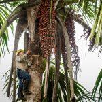 Expoamazónica 2019 por la protección de los aguajales
